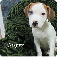 Adopt A Pet :: Jasper - Bartonsville, PA