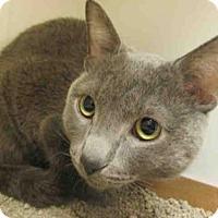 Adopt A Pet :: *SMOKEY - Upper Marlboro, MD