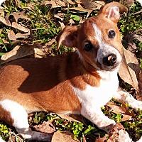 Adopt A Pet :: Bullet - Killian, LA