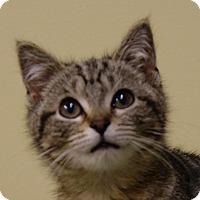 Adopt A Pet :: Paisley - Dundee, MI