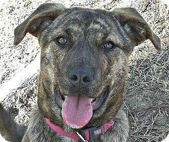 dori adopted puppy mn somers ct german shepherd