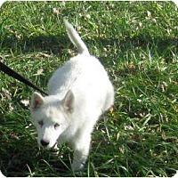 Adopt A Pet :: Aspen - Antioch, IL