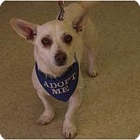 Adopt A Pet :: Gabriel - Phoenix, AZ