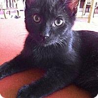 Adopt A Pet :: Sampson - Reston, VA