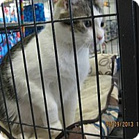Adopt A Pet :: Cindy - West Dundee, IL