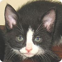 Adopt A Pet :: BOBBY - Hamilton, NJ
