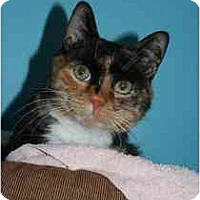 Adopt A Pet :: Sophia - Marietta, GA