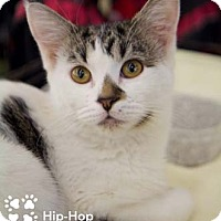 Adopt A Pet :: Hip-Hop - Merrifield, VA
