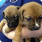 Adopt A Pet :: Puppies