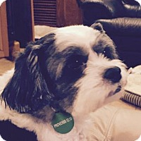 Adopt A Pet :: Chico - Nashville, TN