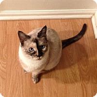 Adopt A Pet :: Zuri - Greeley, CO