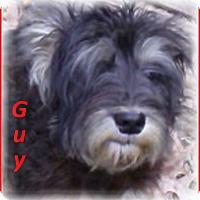 Adopt A Pet :: Gus-Adoption Pending - Marlborough, MA