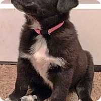 Adopt A Pet :: Maggie - new pup! - Beacon, NY