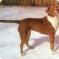 Adopt A Pet :: Madison - Toledo, OH