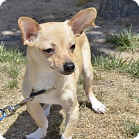 Adopt A Pet :: BooBoo - Meridian, ID