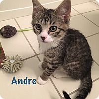 Adopt A Pet :: Andre - Jackson, NJ