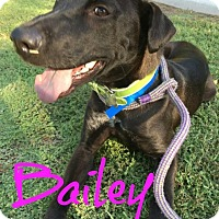 Adopt A Pet :: Bailey - Scottsdale, AZ