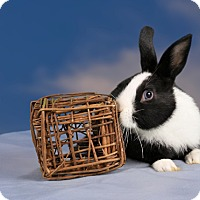 Adopt A Pet :: Bluebell - Marietta, GA
