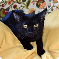Adopt A Pet :: Sookie - Bristol, CT