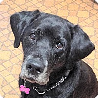 Adopt A Pet :: Ash - Surrey, BC