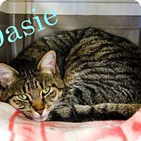 Adopt A Pet :: Dasie - Hamilton, MT