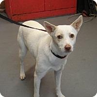 Adopt A Pet :: Jayla - Aurora, IL