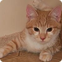 Adopt A Pet :: Froyo - Bedford, VA