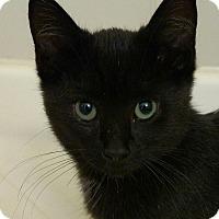 Adopt A Pet :: Watson - Ypsilanti, MI