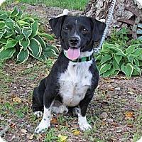 Adopt A Pet :: POGO - Humboldt, TN