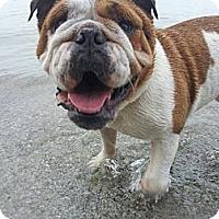 Adopt A Pet :: Becca - Strongsville, OH