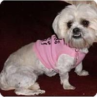 Adopt A Pet :: Gemma - Mooy, AL