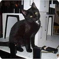 Adopt A Pet :: Tuesday - Hamburg, NY