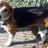 Adopt A Pet :: Willow - Novi, MI