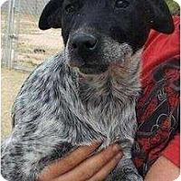 Adopt A Pet :: Kylee (adoption pending) - Phoenix, AZ