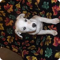 Adopt A Pet :: NOVA - Mechanicsburg, PA