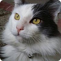 Adopt A Pet :: Grayson - Hollywood, CA