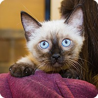 Adopt A Pet :: Sophia - Irvine, CA