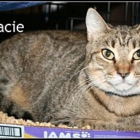 Adopt A Pet :: Gracie - Houston, TX
