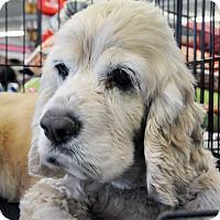 Adopt A Pet :: Rhea - Georgetown, KY