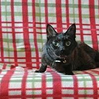 Adopt A Pet :: Palos - Sebastian, FL