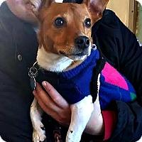 Adopt A Pet :: Twix - Freeport, ME