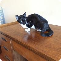 Adopt A Pet :: Billie - Duluth, GA