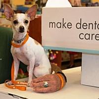 Adopt A Pet :: Mikey - Gilbert, AZ