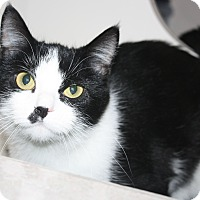 Adopt A Pet :: Tuxie - Fort Wayne, IN