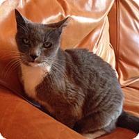 Adopt A Pet :: Ashley - Novato, CA