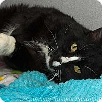 Adopt A Pet :: Jarvan - Fort Collins, CO