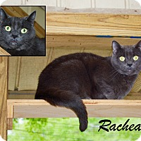 Adopt A Pet :: Racheal - Daleville, AL