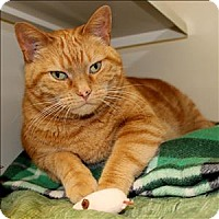 Adopt A Pet :: Mr. Scarlet - Duluth, MN