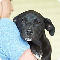 Adopt A Pet :: Sparkle - Homewood, AL