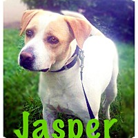 Adopt A Pet :: Jasper - Greensboro, NC